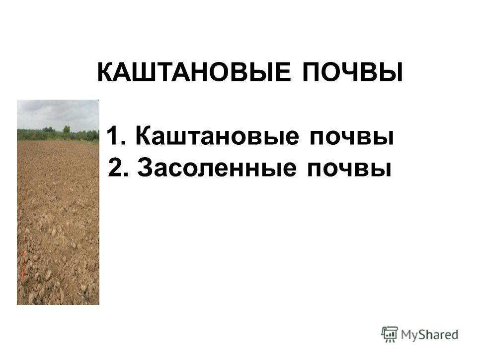 КАШТАНОВЫЕ ПОЧВЫ 1. Каштановые почвы 2. Засоленные почвы