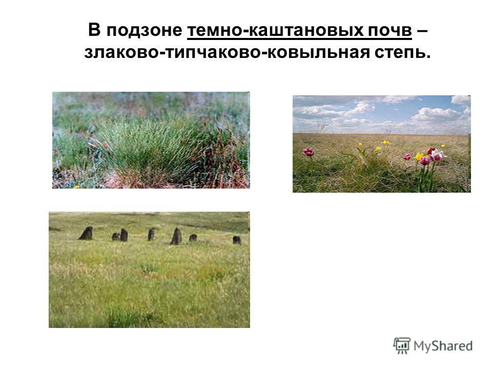 В подзоне темно-каштановых почв – злаково-типчаково-ковыльная степь.