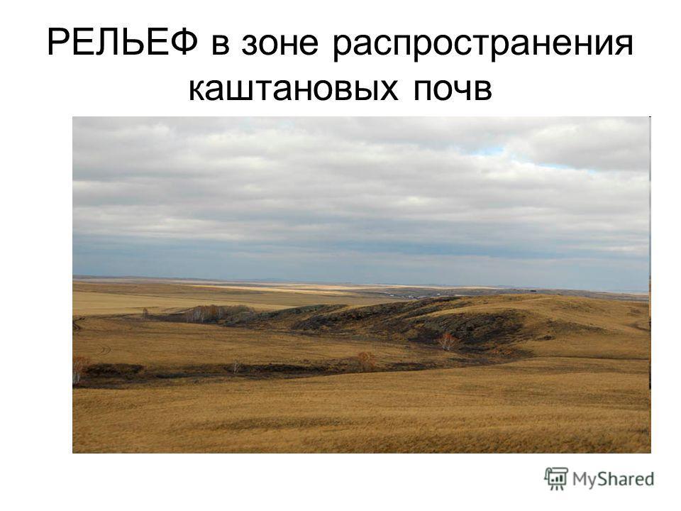 РЕЛЬЕФ в зоне распространения каштановых почв
