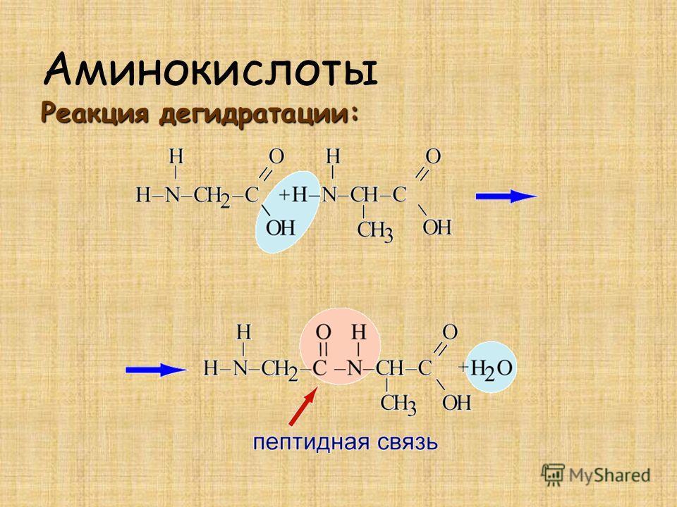 Реакция дегидратации: Аминокислоты Реакция дегидратации: