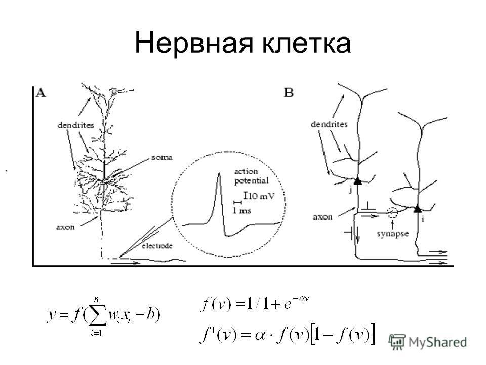 Нервная клетка,