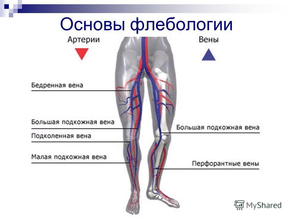 Основы флебологии