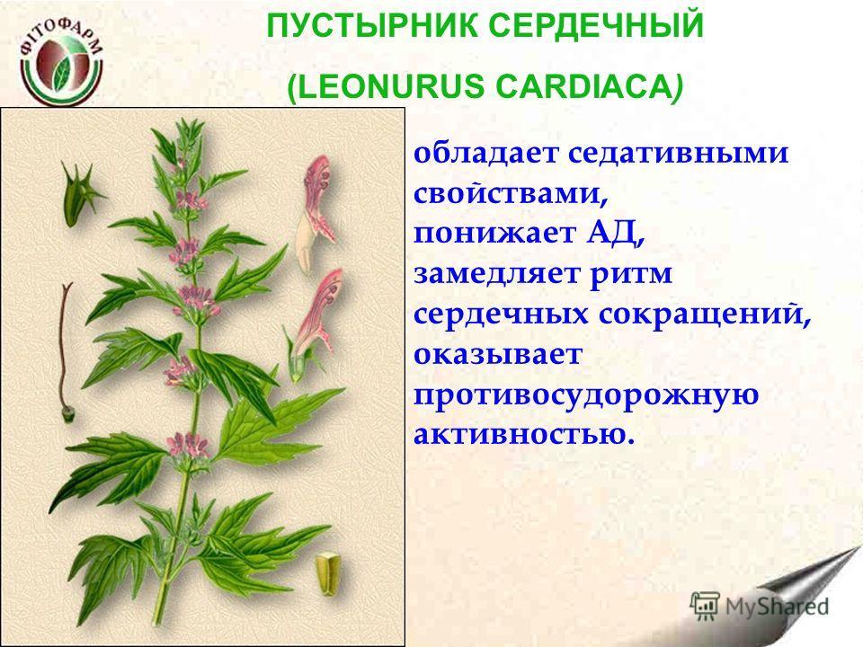 ПУСТЫРНИК СЕРДЕЧНЫЙ (LEONURUS CARDIACA) обладает седативными свойствами, понижает АД, замедляет ритм сердечных сокращений, оказывает противосудорожную активностью.