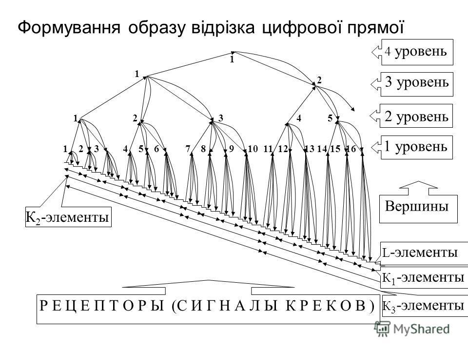 Вершины 3 уровень 2 уровень 4 уровень 1 уровень Р Е Ц Е П Т О Р Ы (С И Г Н А Л Ы К Р Е К О В ) L -элементы К 1 -элементы К 2 -элементы К 3 -элементы 1 2 3 4 5 6 7 8 9 10 11 12 13 14 15 16 1 2 3 4 5 1 2 1 Формування образу відрізка цифрової прямої
