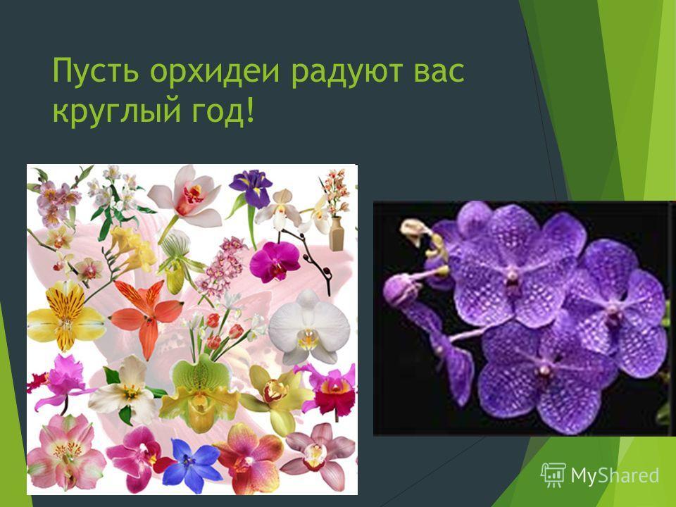 Пусть орхидеи радуют вас круглый год!