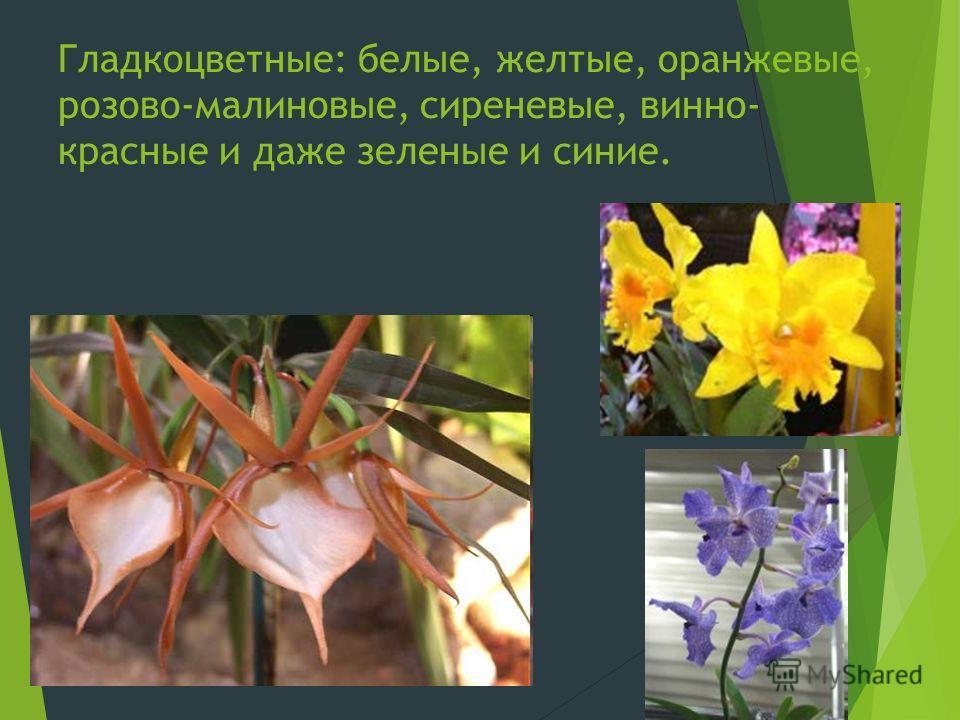 Гладкоцветные: белые, желтые, оранжевые, розово-малиновые, сиреневые, винно- красные и даже зеленые и синие.