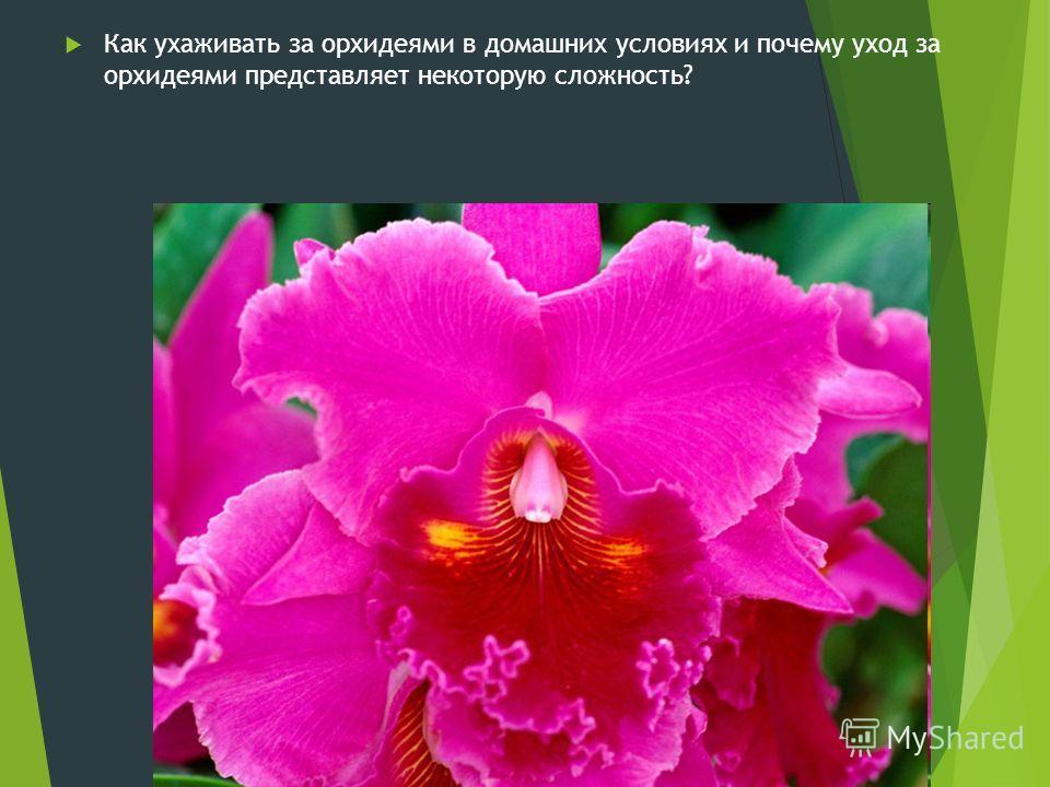 Как ухаживать за орхидеями в домашних условиях и почему уход за орхидеями представляет некоторую сложность?