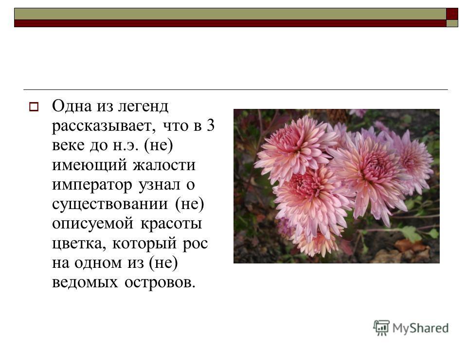 Одна из легенд рассказывает, что в 3 веке до н.э. (не) имеющий жалости император узнал о существовании (не) описуемой красоты цветка, который рос на одном из (не) ведомых островов.