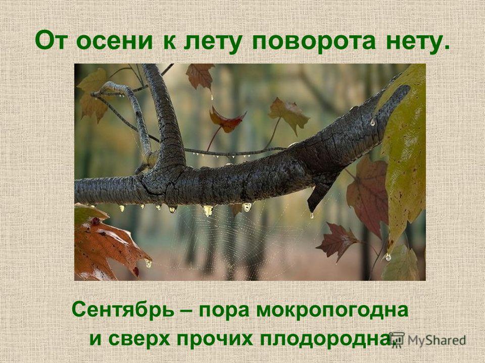 От осени к лету поворота нету. Сентябрь – пора мокропогодна и сверх прочих плодородна.
