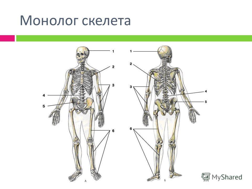 Монолог скелета