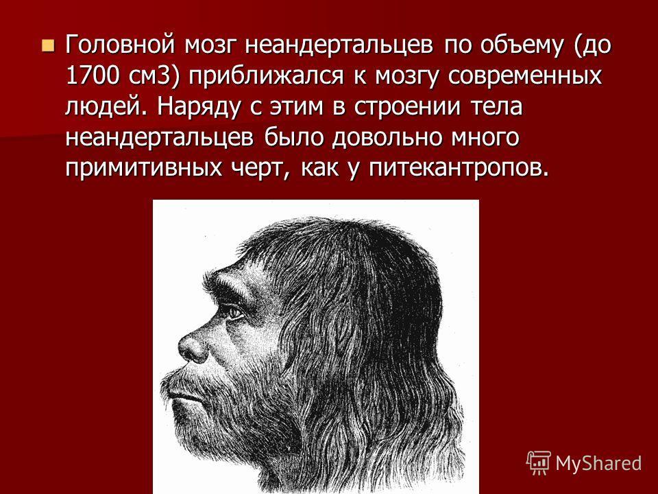 Головной мозг неандертальцев по объему (до 1700 см3) приближался к мозгу современных людей. Наряду с этим в строении тела неандертальцев было довольно много примитивных черт, как у питекантропов. Головной мозг неандертальцев по объему (до 1700 см3) п