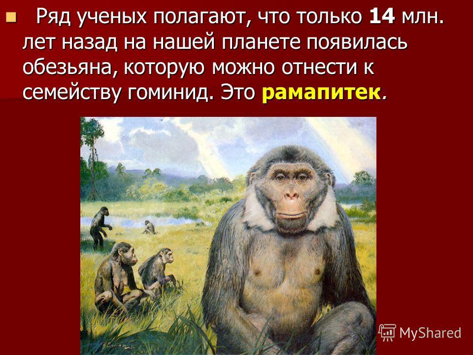 Ряд ученых полагают, что только 14 млн. лет назад на нашей планете появилась обезьяна, которую можно отнести к семейству гоминид. Это рамапитек. Ряд ученых полагают, что только 14 млн. лет назад на нашей планете появилась обезьяна, которую можно отне