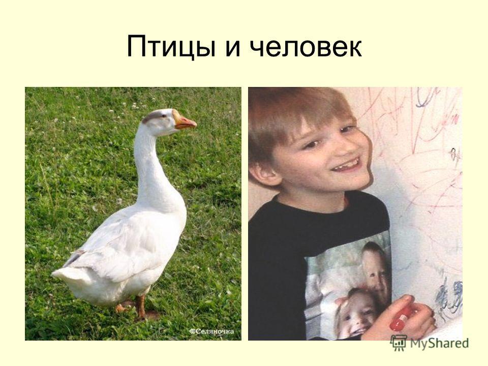 Птицы и человек
