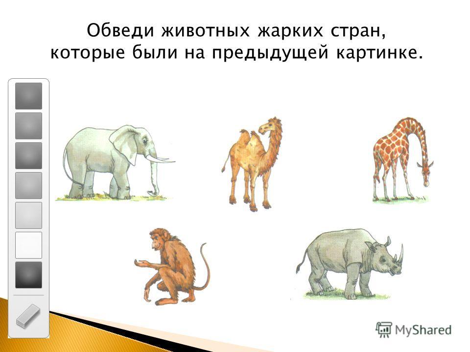 Обведи животных жарких стран, которые были на предыдущей картинке.