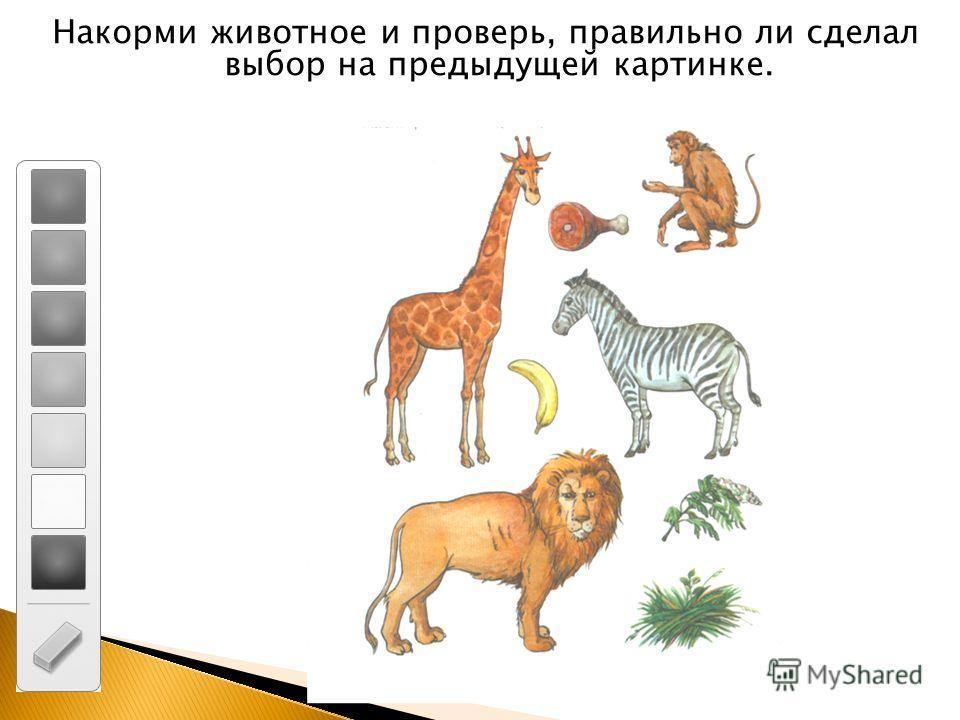 Накорми животное и проверь, правильно ли сделал выбор на предыдущей картинке.