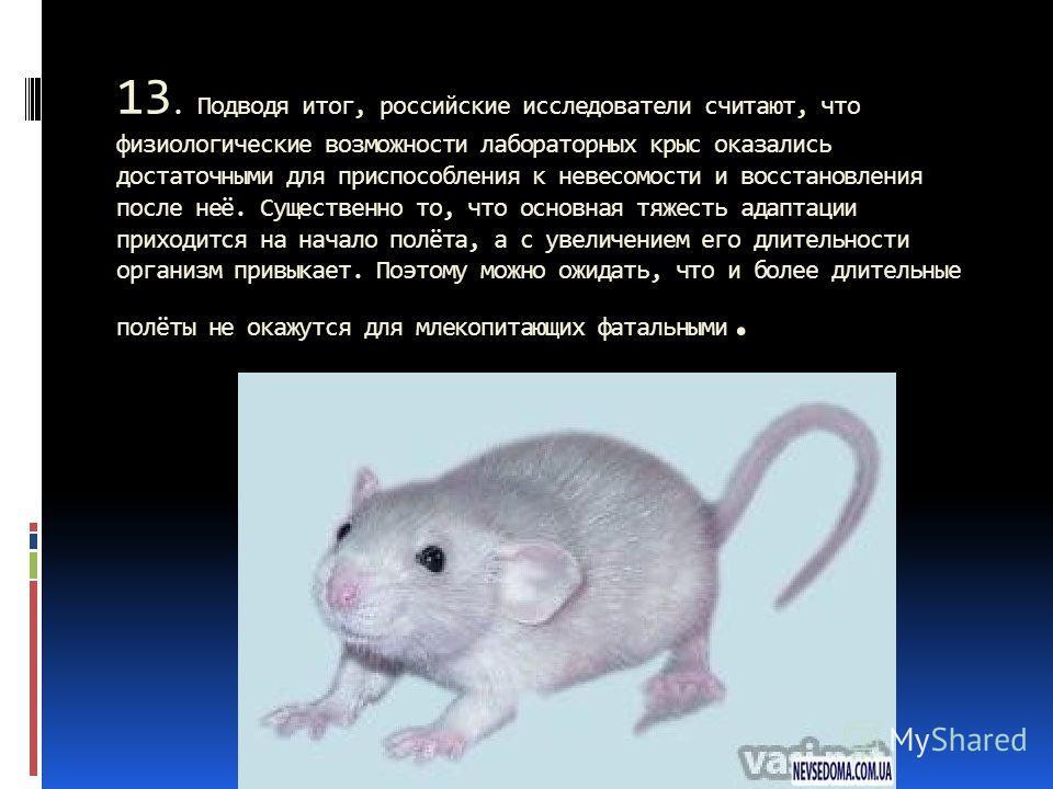 13. Подводя итог, российские исследователи считают, что физиологические возможности лабораторных крыс оказались достаточными для приспособления к невесомости и восстановления после неё. Существенно то, что основная тяжесть адаптации приходится на нач