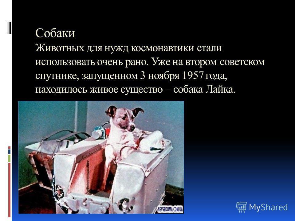 Собаки Животных для нужд космонавтики стали использовать очень рано. Уже на втором советском спутнике, запущенном 3 ноября 1957 года, находилось живое существо – собака Лайка.
