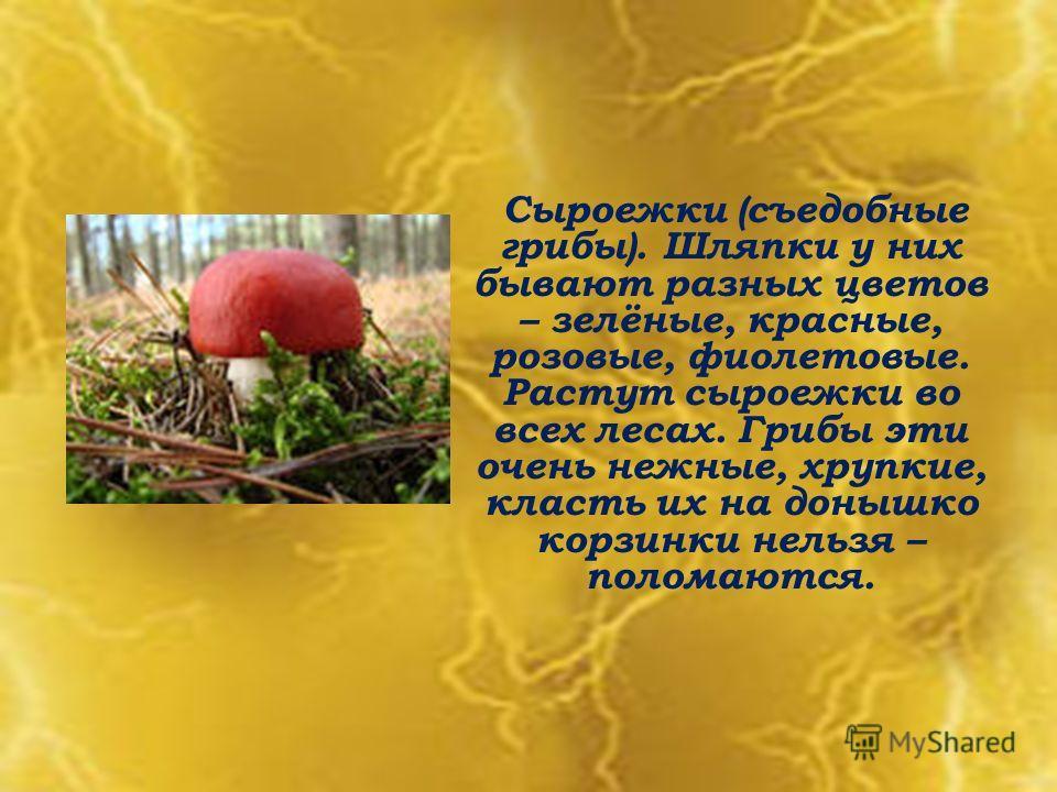 Сыроежки (съедобные грибы). Шляпки у них бывают разных цветов – зелёные, красные, розовые, фиолетовые. Растут сыроежки во всех лесах. Грибы эти очень нежные, хрупкие, класть их на донышко корзинки нельзя – поломаются.