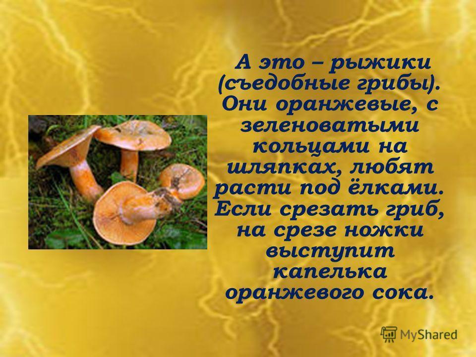 А это – рыжики (съедобные грибы). Они оранжевые, с зеленоватыми кольцами на шляпках, любят расти под ёлками. Если срезать гриб, на срезе ножки выступит капелька оранжевого сока.