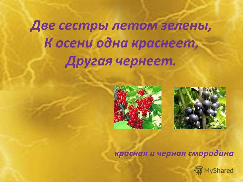 Две сестры летом зелены, К осени одна краснеет, Другая чернеет. красная и черная смородина