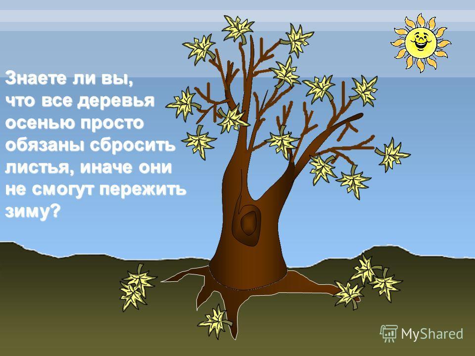 Знаете ли вы, что все деревья осенью просто обязаны сбросить листья, иначе они не смогут пережить зиму?