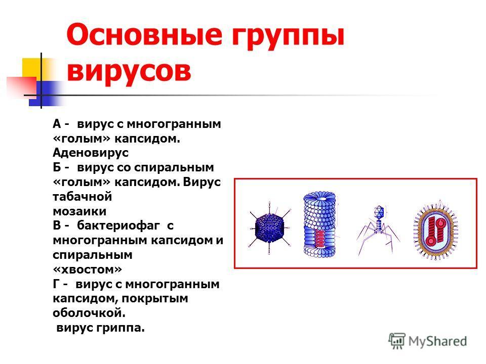Основные группы вирусов А - вирус с многогранным «голым» капсидом. Аденовирус Б - вирус со спиральным «голым» капсидом. Вирус табачной мозаики В - бактериофаг с многогранным капсидом и спиральным «хвостом» Г - вирус с многогранным капсидом, покрытым
