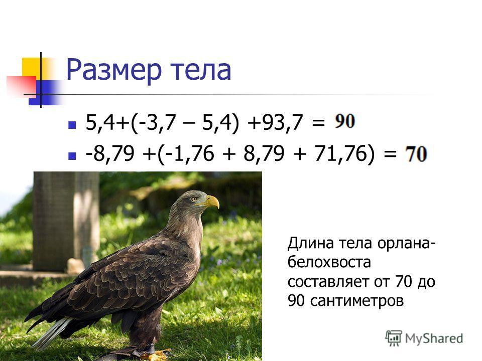 Размер тела 5,4+(-3,7 – 5,4) +93,7 = -8,79 +(-1,76 + 8,79 + 71,76) = Длина тела орлана- белохвоста составляет от 70 до 90 сантиметров
