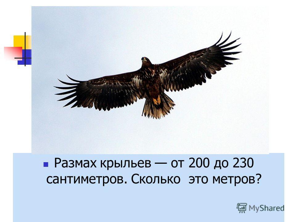 Размах крыльев Упростите выражение: p +(200 –p) = -a + (a + 230) = Размах крыльев от 200 до 230 сантиметров. Сколько это метров?