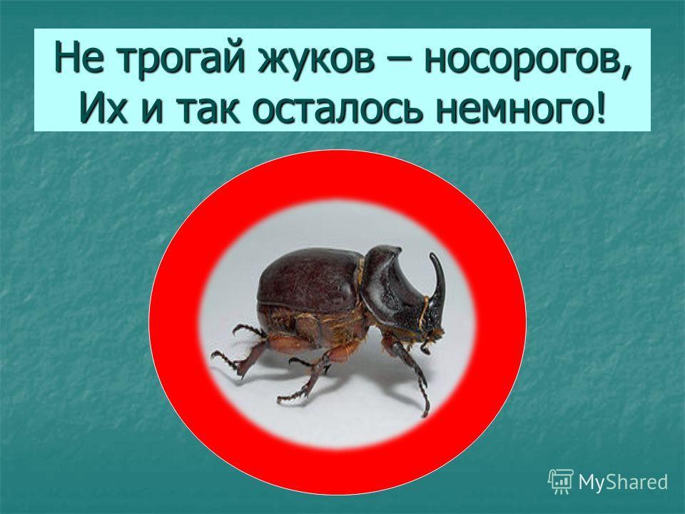 Не трогай жуков – носорогов, Их и так осталось немного!
