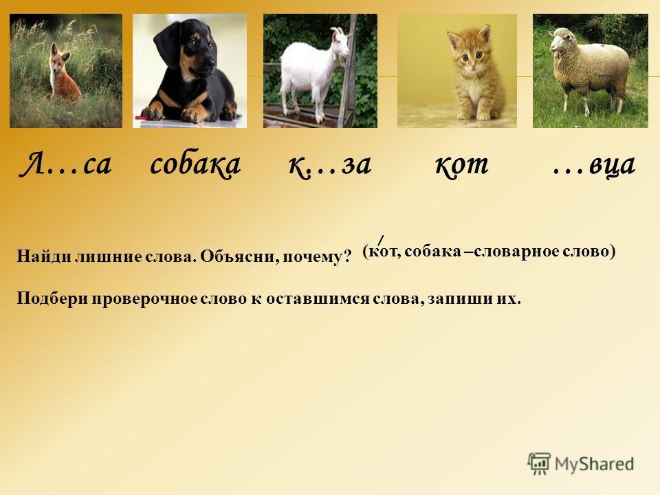 Л…са собака к…за кот …вца Найди лишние слова. Объясни, почему? Подбери проверочное слово к оставшимся слова, запиши их. (кот, собака –словарное слово)