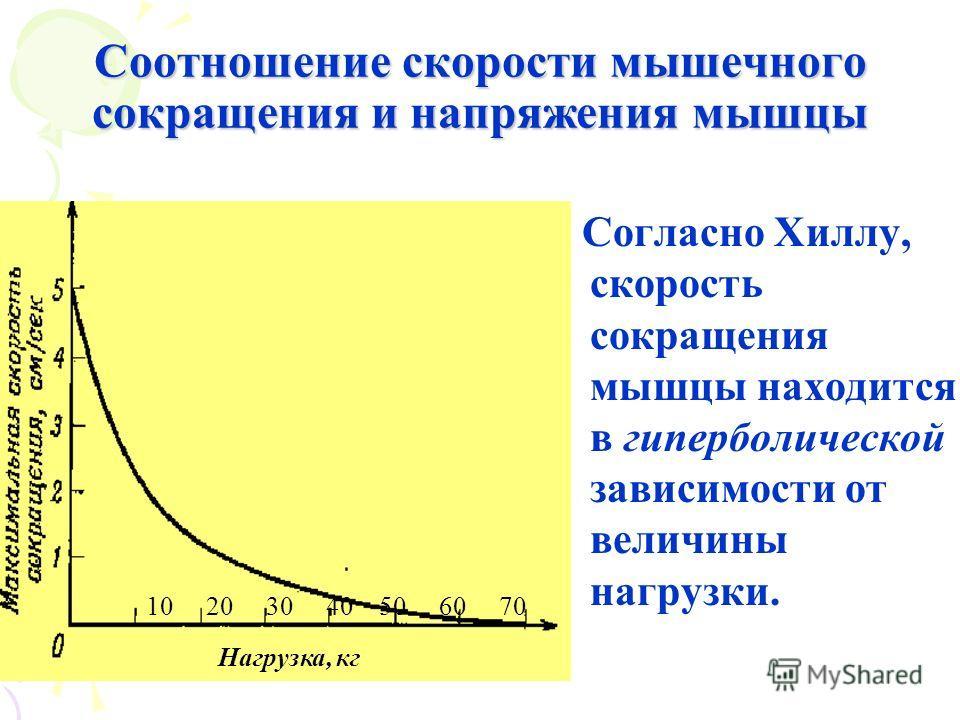 Соотношение скорости мышечного сокращения и напряжения мышцы 10 20 30 40 50 60 70 Согласно Хиллу, скорость сокращения мышцы находится в гиперболической зависимости от величины нагрузки. Нагрузка, кг