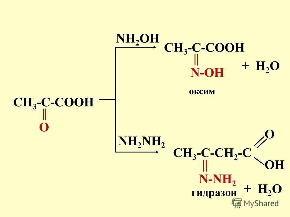 CH 3 -C-COOH O NH 2 OH оксим + H 2 O CH 3 -C-COOH N-OH CH 3 -C-CH 2 -C OH O N-NH 2 NH 2 гидразон + H 2 O