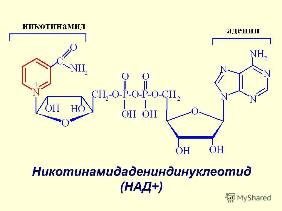Никотинамидадениндинуклеотид (НАД+)
