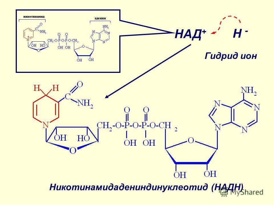 НАД + H - Никотинамидадениндинуклеотид (НАДН) Гидрид ион