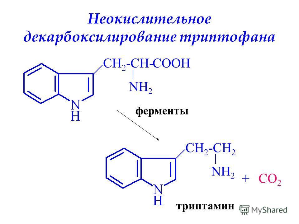 Неокислительное декарбоксилирование триптофана CH 2 -CH- NH 2 COOH ферменты CH 2 -CH 2 NH 2 +CO 2 триптамин