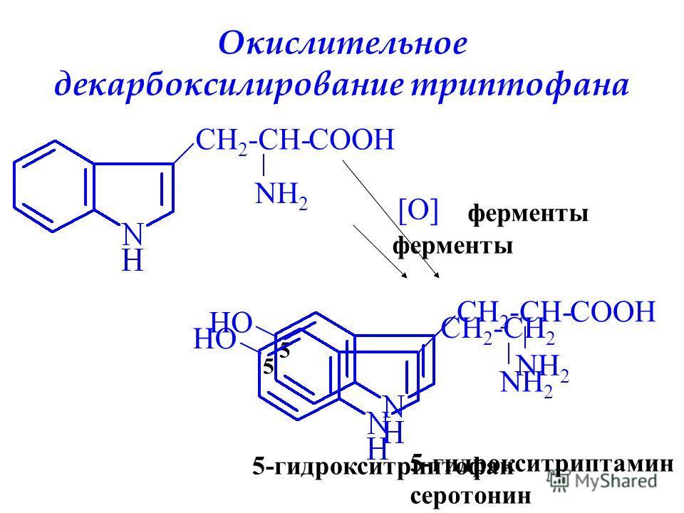Окислительное декарбоксилирование триптофана CH 2 -CH- NH 2 COOH ферменты [O] COOHCH 2 -CH- NH 2 5 HO 5-гидрокситриптофан ферменты CH 2 -CH 2 NH 2 5 HO 5-гидрокситриптамин серотонин