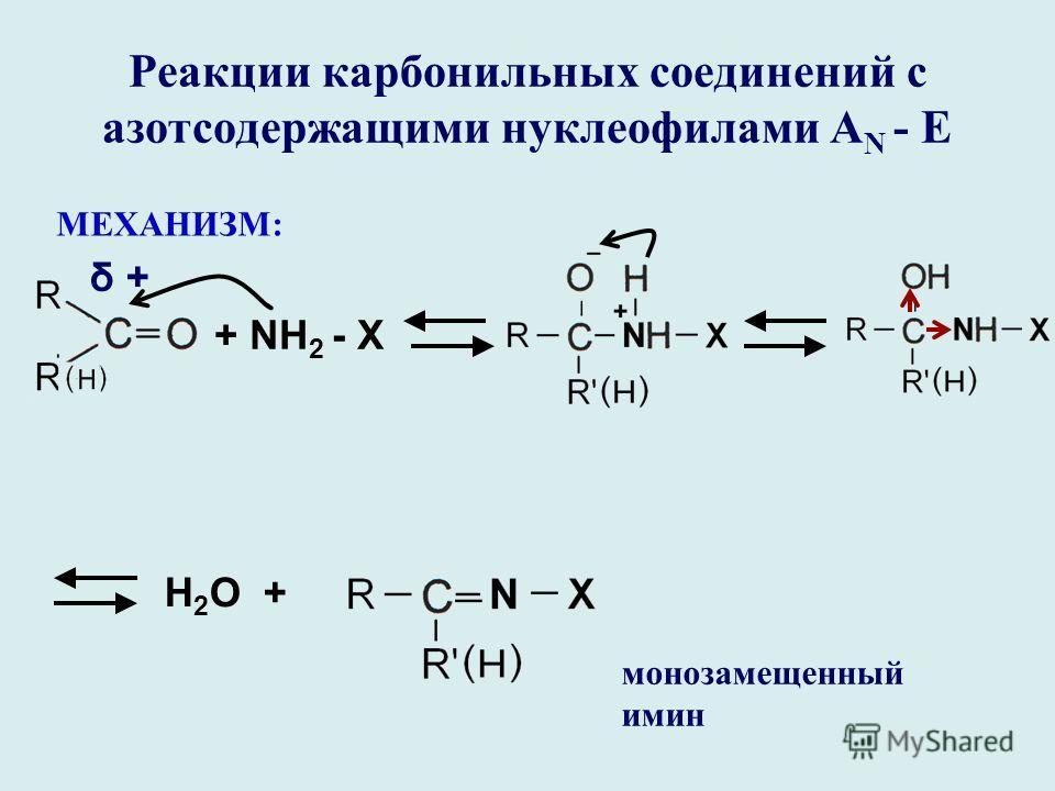Реакции карбонильных соединений с азотсодержащими нуклеофилами А N - E МЕХАНИЗМ: + NH 2 - X Н 2 О + монозамещенный имин δ +δ +