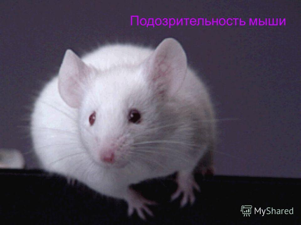 Подозрительность мыши