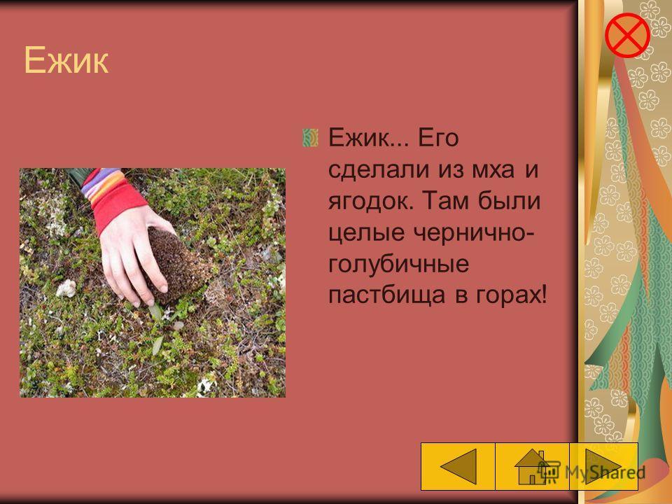 Ежик Ежик... Его сделали из мха и ягодок. Там были целые чернично- голубичные пастбища в горах!
