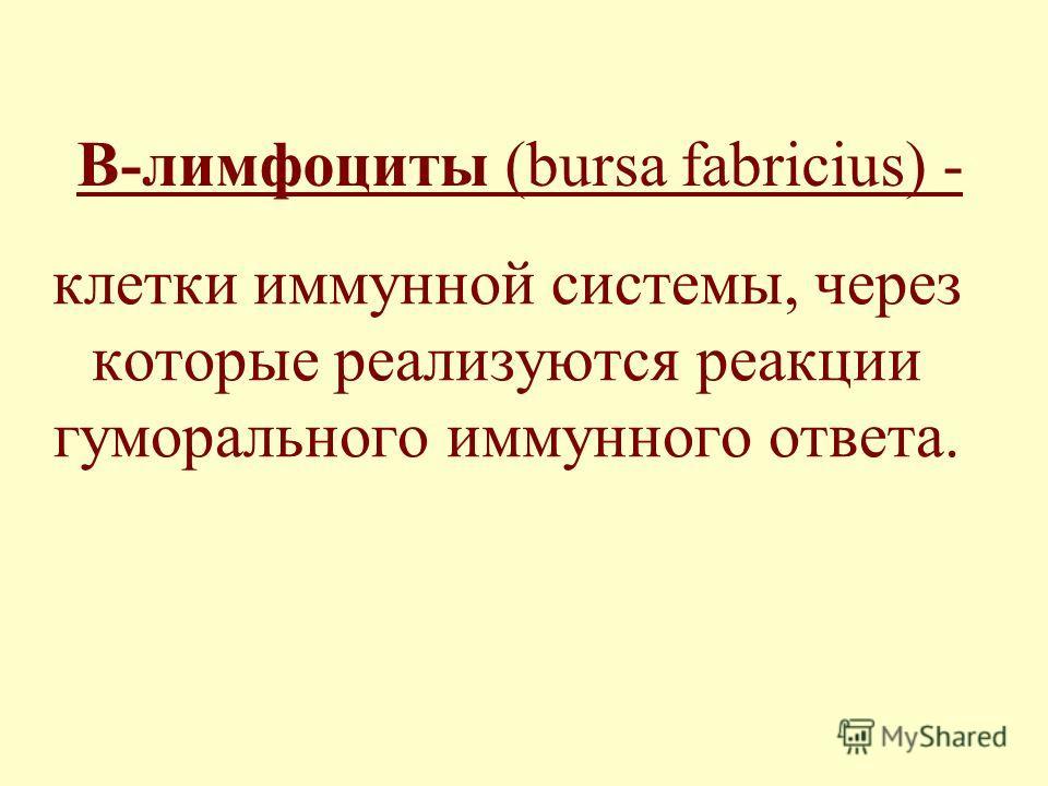 В-лимфоциты (bursa fabricius) - клетки иммунной системы, через которые реализуются реакции гуморального иммунного ответа.