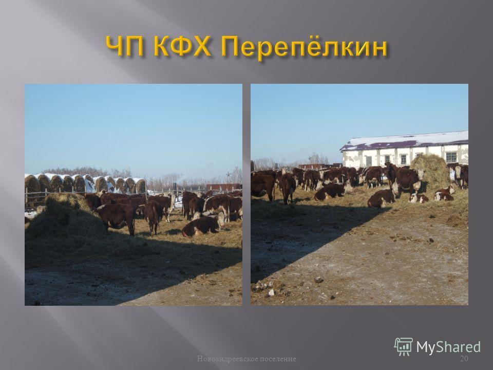 Новоандреевское поселение 20