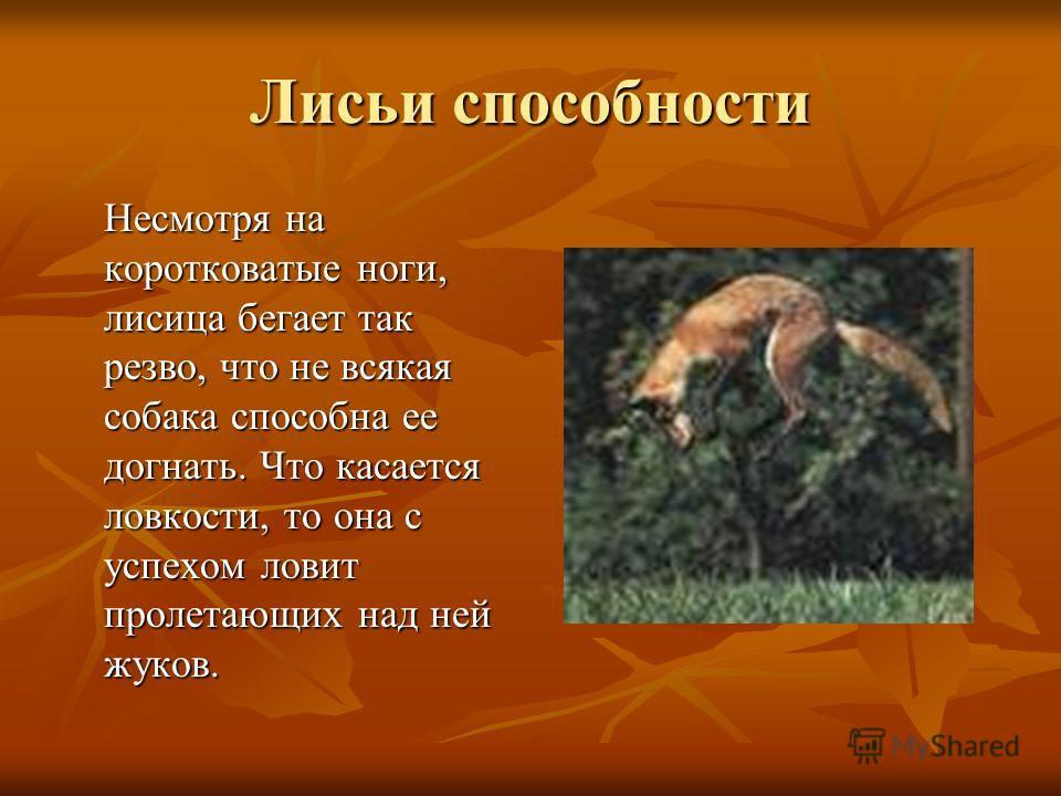 Несмотря на коротковатые ноги, лисица бегает так резво, что не всякая собака способна ее догнать. Что касается ловкости, то она с успехом ловит пролетающих над ней жуков. Лисьи способности