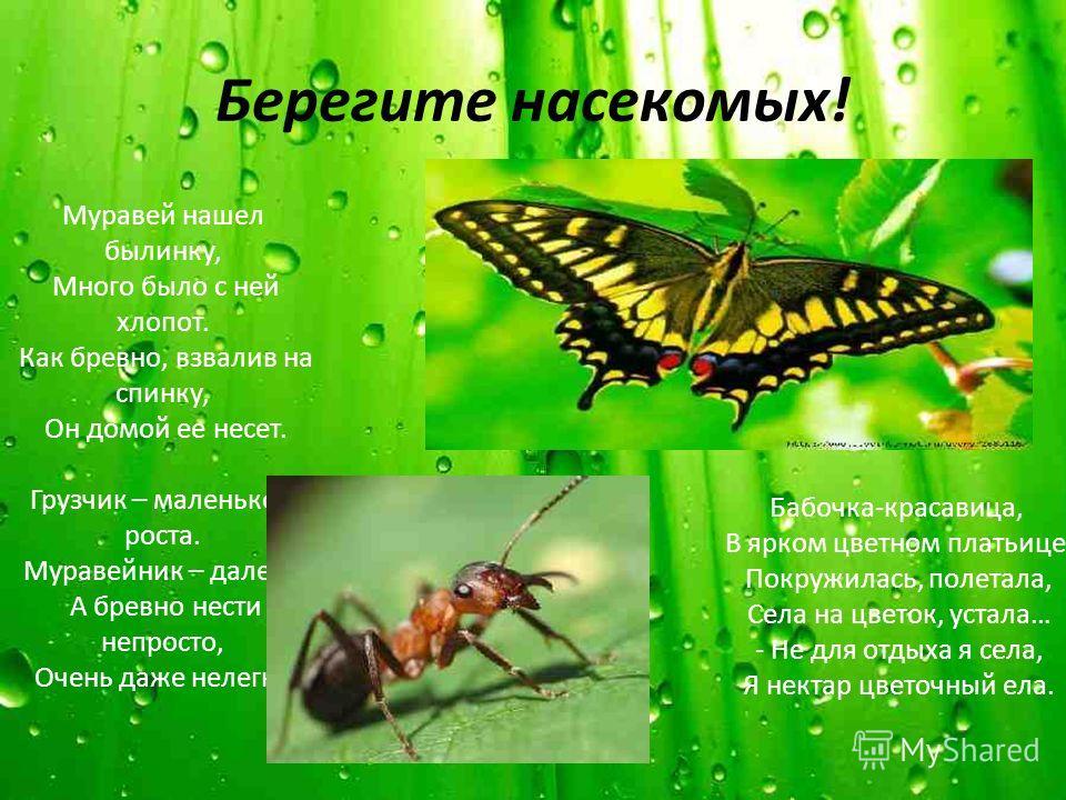 Берегите насекомых! Муравей нашел былинку, Много было с ней хлопот. Как бревно, взвалив на спинку, Он домой ее несет. Грузчик – маленького роста. Муравейник – далеко. А бревно нести непросто, Очень даже нелегко. Бабочка-красавица, В ярком цветном пла