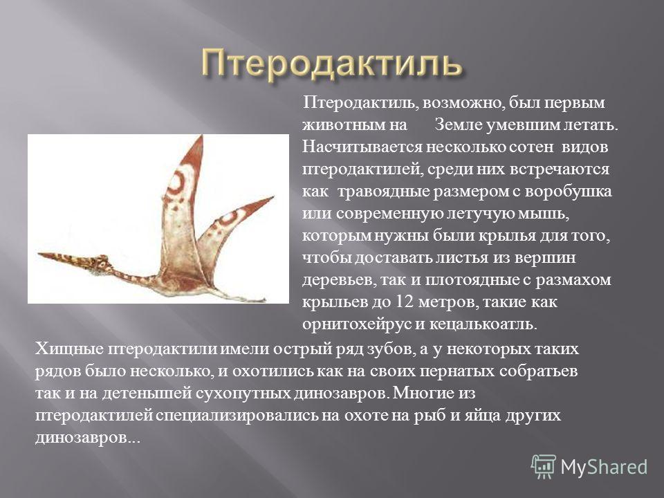 Птеродактиль, возможно, был первым животным на Земле умевшим летать. Насчитывается несколько сотен видов птеродактилей, среди них встречаются как травоядные размером с воробушка или современную летучую мышь, которым нужны были крылья для того, чтобы