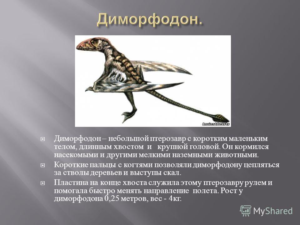 Диморфодон – небольшой птерозавр с коротким маленьким телом, длинным хвостом и крупной головой. Он кормился насекомыми и другими мелкими наземными животными. Короткие пальцы с когтями позволяли диморфодону цепляться за стволы деревьев и выступы скал.