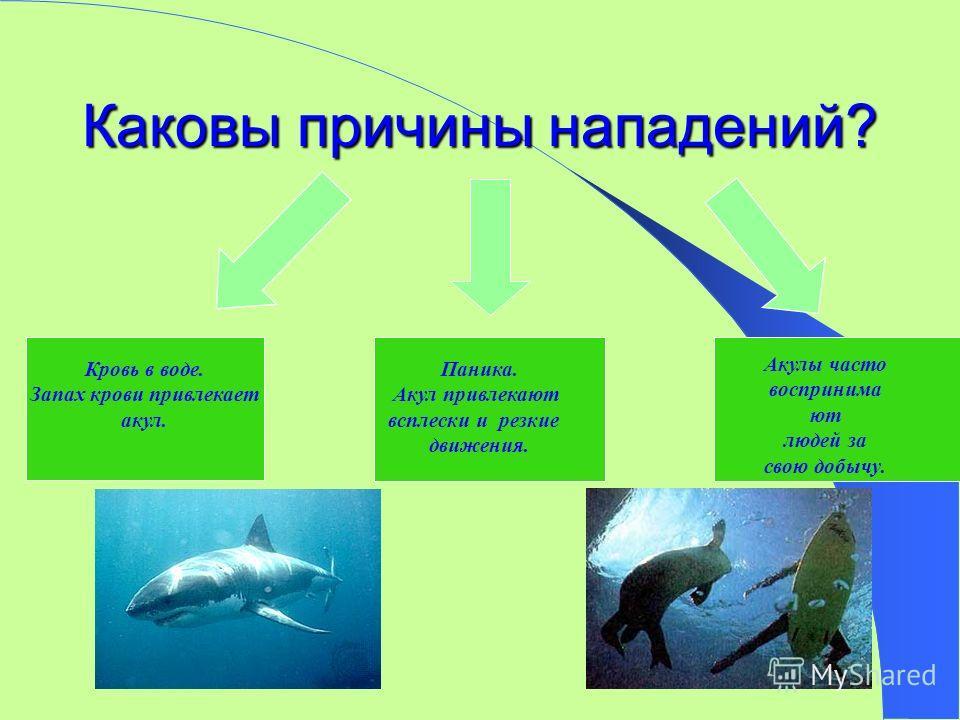 Каковы причины нападений? Кровь в воде. Запах крови привлекает акул. Паника. Акул привлекают всплески и резкие движения. Акулы часто воспринима ют людей за свою добычу.
