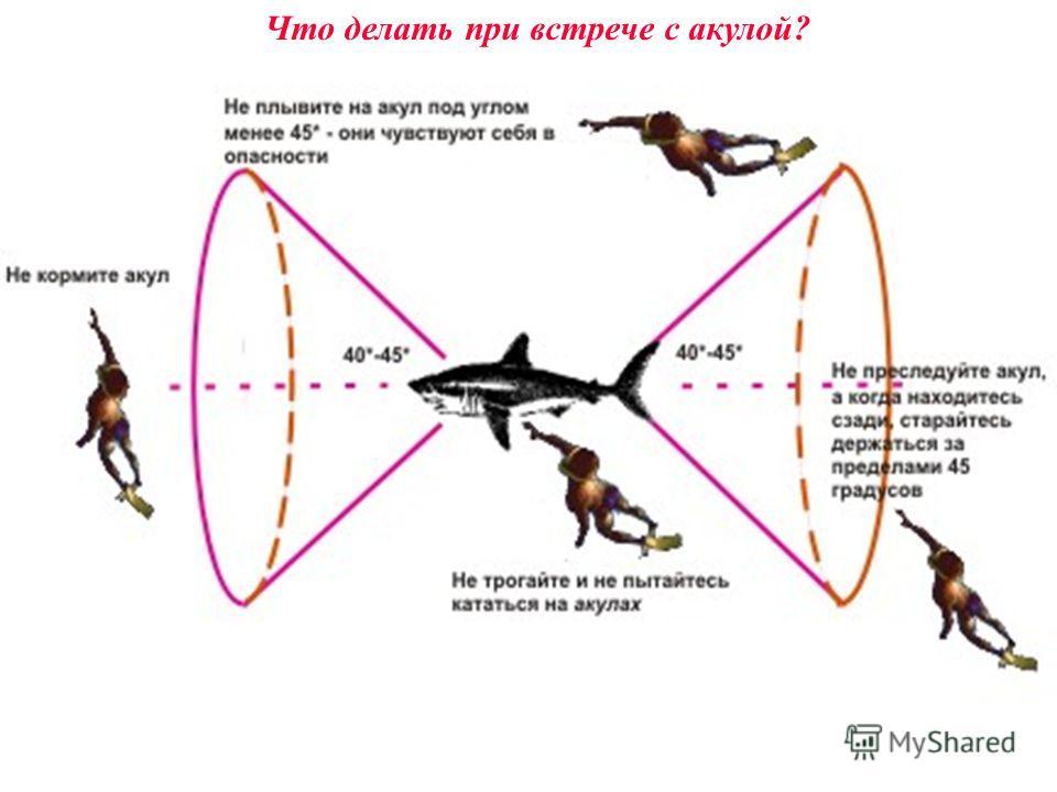 Что делать при встрече с акулой?