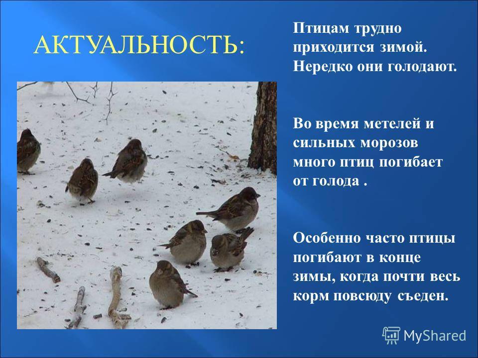 АКТУАЛЬНОСТЬ: Птицам трудно приходится зимой. Нередко они голодают. Во время метелей и сильных морозов много птиц погибает от голода. Особенно часто птицы погибают в конце зимы, когда почти весь корм повсюду съеден.