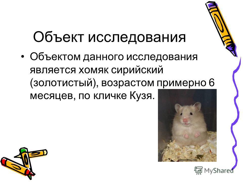 Объект исследования Объектом данного исследования является хомяк сирийский (золотистый), возрастом примерно 6 месяцев, по кличке Кузя.