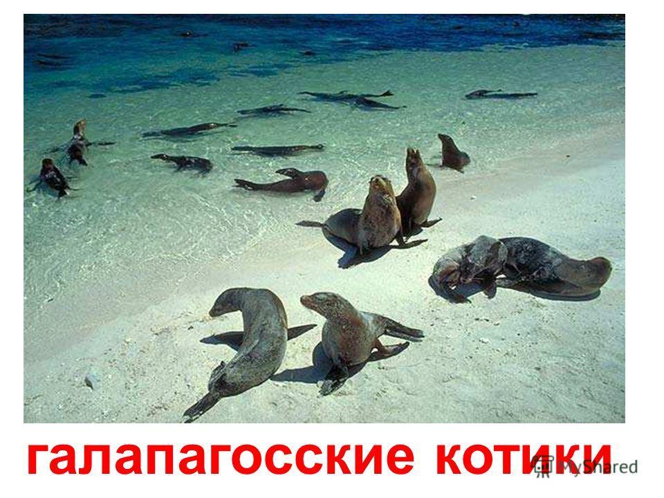 тюлень-монах Тюлень-монах